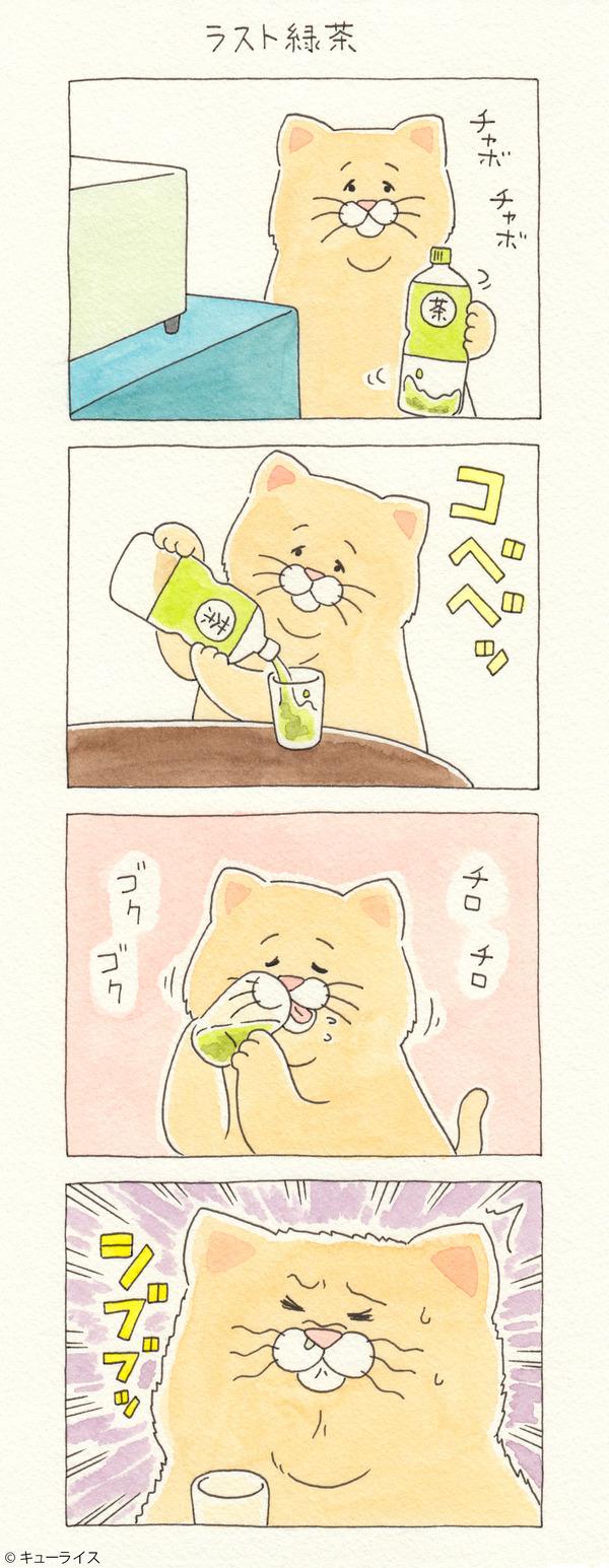 ネコノヒー ラスト緑茶
