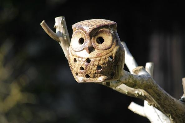 owl-287019_960_720