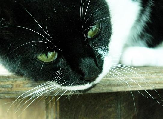 cat-270167_960_720