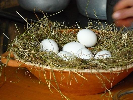 egg-351814_960_720