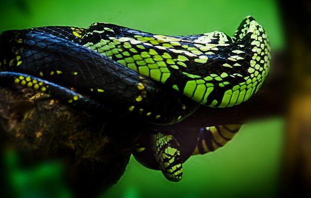 snake-959652_960_720