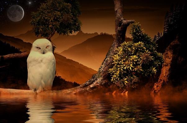 owl-846842_960_720