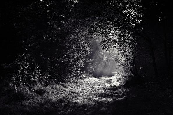 woods-690415_960_720