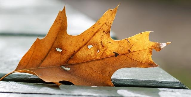 leaf-3714694_960_720