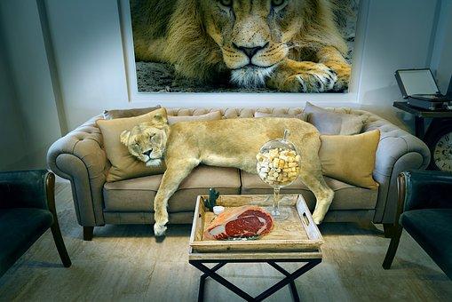 lion-3817147__340