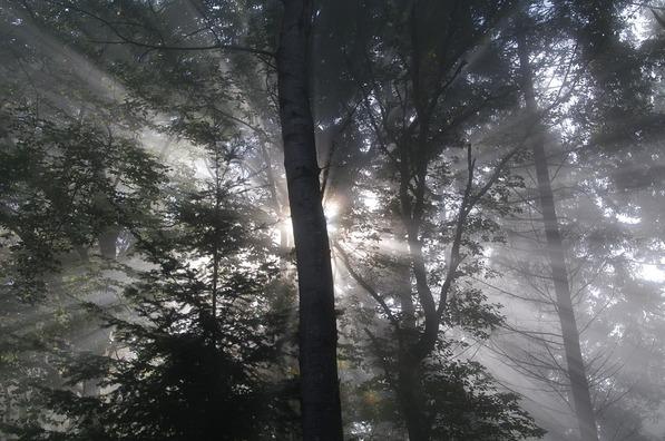 woods-2008107_960_720