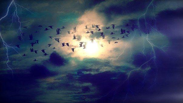 birds-384954__340