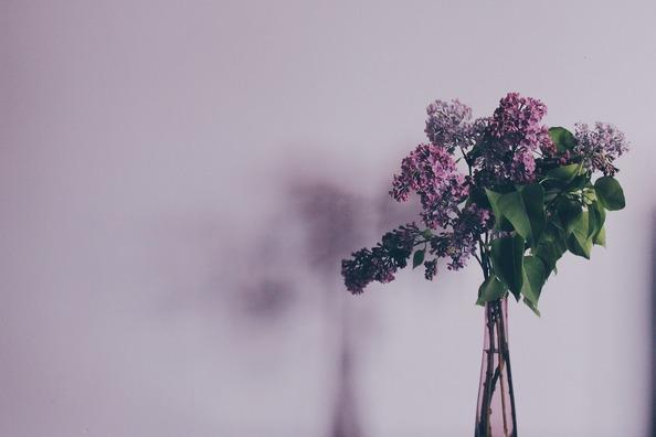 flower-731480_1920