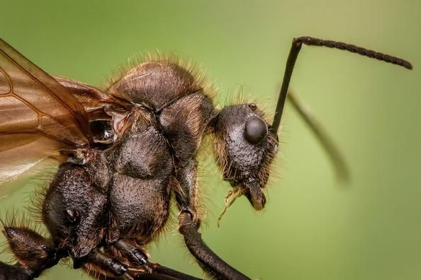 ant-1127650_1280