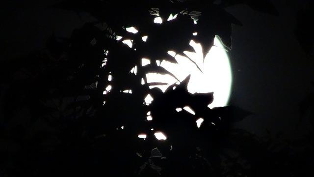 midnight-394208_960_720