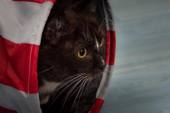 cat-1168012_960_720