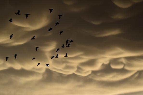 mammatus-clouds-3742847_960_720