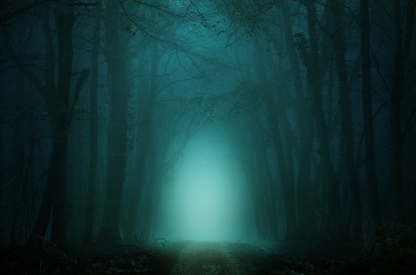 forest-4099730_960_720