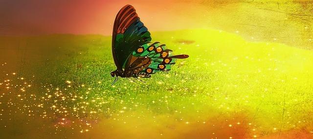 butterfly-694761__340