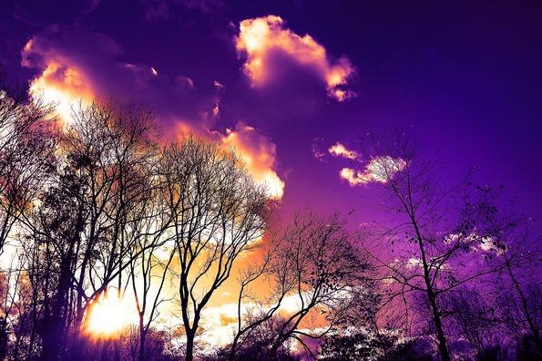 tree-3114881_960_720