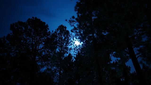 moonlight-2813797_960_720