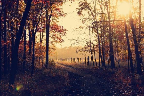 woodland-1031154_960_720