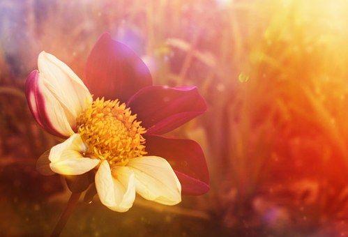 flower-501984__340