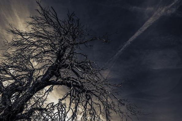 tree-3792419_960_720
