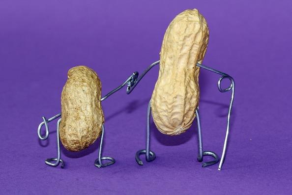 peanut-660301_960_720
