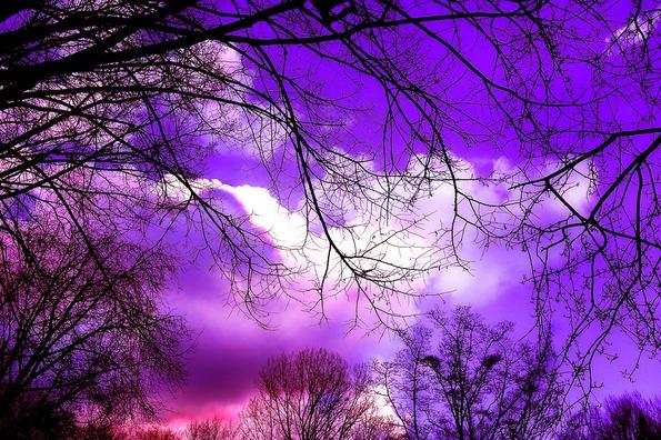 tree-3107699_960_720