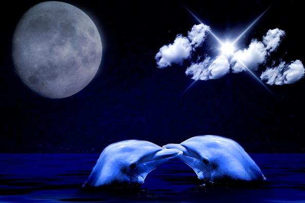 dolphin-1059895_960_720