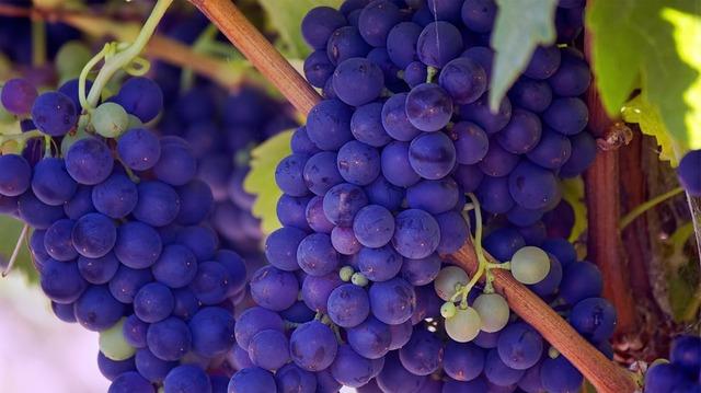 grapes-690977_960_720