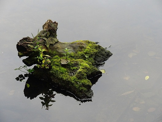 tree-stump-2076267_960_720
