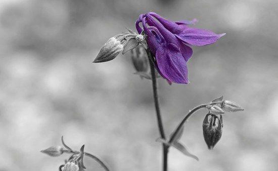 flower-659339__340