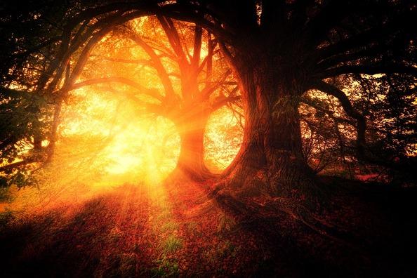 trees-2562083_960_720