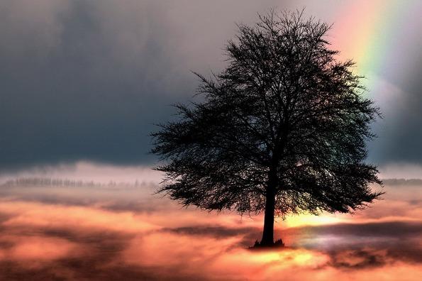 tree-2166193_960_720