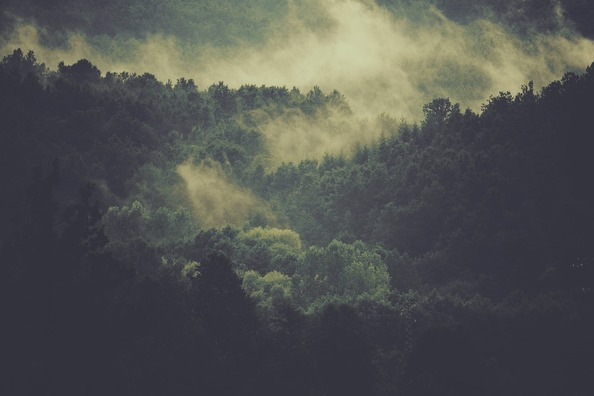 forest-918548_960_720