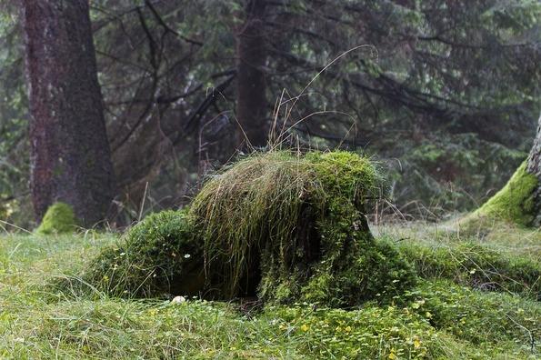 nature-1916005_960_720