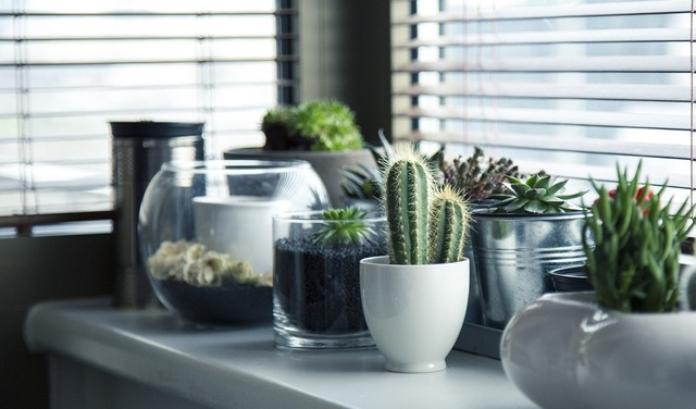 pots-716579_960_720