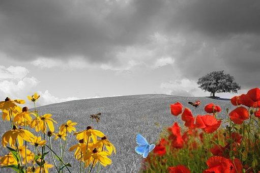 meadow-2401932__340