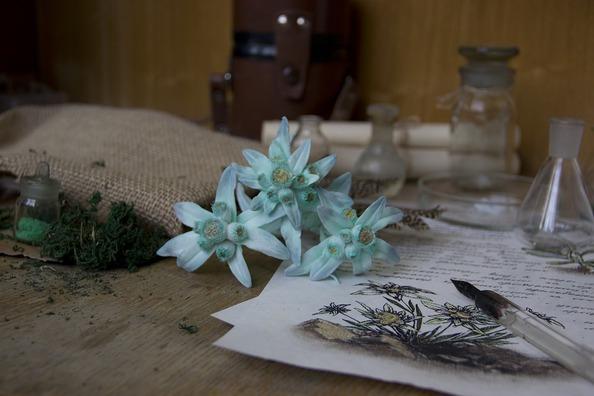 edelweiss-4550629_960_720