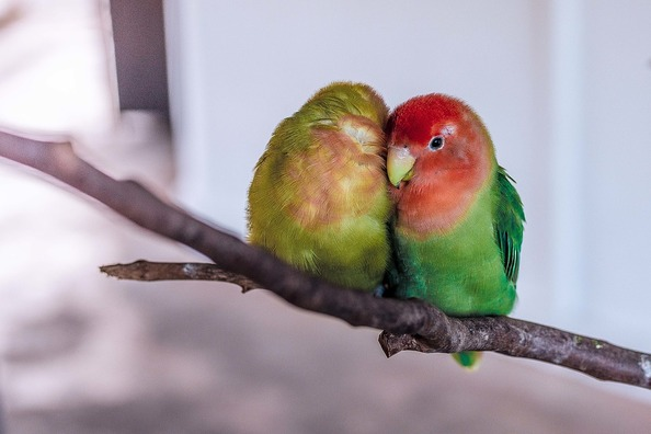 parrot-1245874_960_720