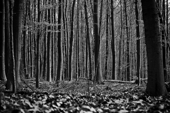 forest-2114772_960_720