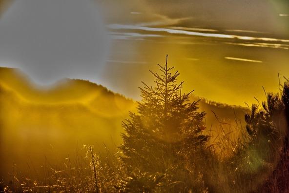 autumn-3817426_960_720
