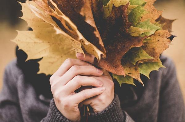 maple-leaves-1030957_960_720