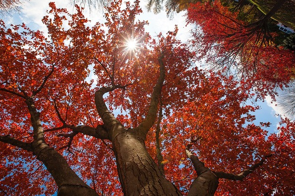 tree-4270509_960_720
