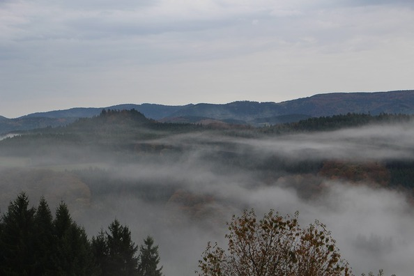 black-forest-1816596_960_720