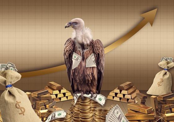 vulture-4212214_960_720