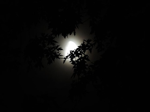 moonlight-through-trees-1616303__480