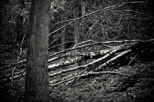 forest-1772381_960_720