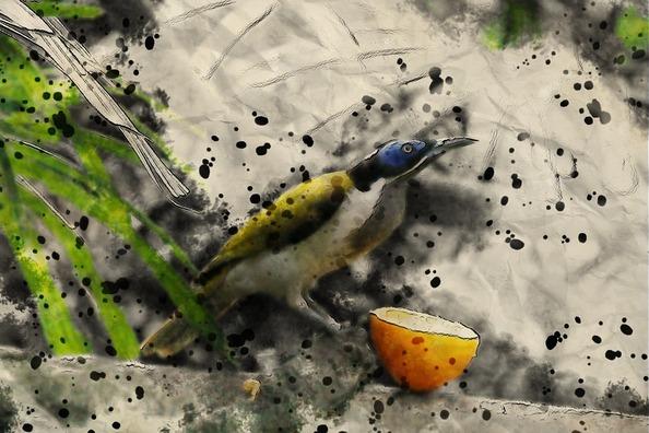 bird-3479881_960_720