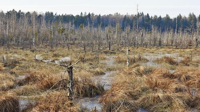 swamp-4040387_960_720
