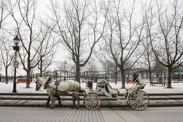 horse-688211_960_720