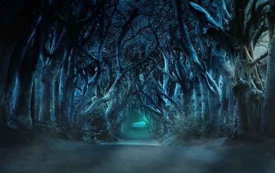 trees-3458478__340