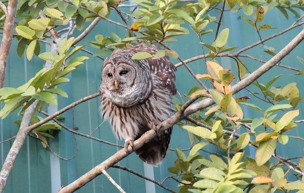 owl-1775391_960_720